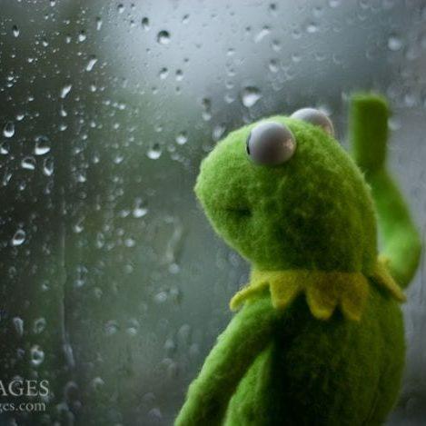 Kermit at window